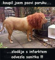 Funny pictures about Good Wig. Oh, and cool pics about Good Wig. Also, Good Wig photos. Funny Shit, Funny Cute, The Funny, Funny Memes, That's Hilarious, Super Funny, Funny Dogs, Funny Stuff, Funny Animals