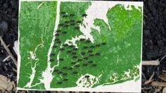TedTalk on urban biogeography: Evolution in a Big City
