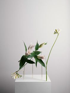 <p>For the next part of 'Posture' series, photographer Carl Kleiner collaborated with Carrara-based Bloc Studios to create these beautiful 'Posture Vases'. Arranged like Ikebana, the upside down flowe