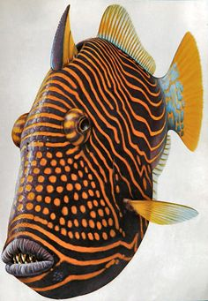 EXOTIC FISH print fullpage vintage by DustyDiggerLise on Etsy, $5.00