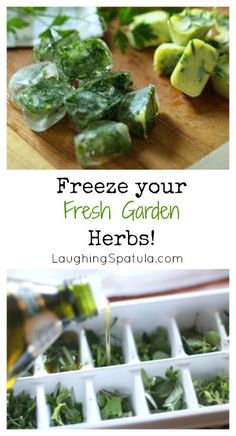 Frozen Fresh Herbs
