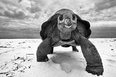 This is an amazing photo! *My* Beach by Dennis Hansen #turtles