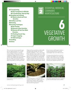 """""""The Cannabis Encyclopedia"""" Book Excerpts Encyclopedia Books, Botany, Horticulture, Trellis, Wii, Cannabis, How To Remove, Health, Plants"""