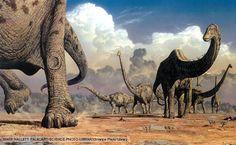 A herd of sauropod dinosaurs, Seismosaurus (Diplodocus) Hallorum, migrating to new feeding areas during the seasonally dry environment of western North America's late Jurassic Period. Dinosaur Videos, Real Dinosaur, Dinosaur Pictures, The Good Dinosaur, Dinosaur Art, Jurrassic Park, Big Animals, Extinct Animals, Prehistoric Creatures