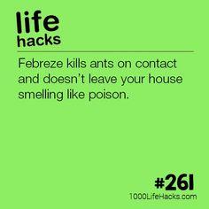 – Febreze Kills Ants On Contact Life Hacks) . - – Febreze Kills Ants On Contact Life Hacks) – Febreze Kills Ant - Hack My Life, Simple Life Hacks, Useful Life Hacks, Awesome Life Hacks, Summer Life Hacks, Household Cleaning Tips, House Cleaning Tips, Cleaning Hacks, Life Hacks Iphone