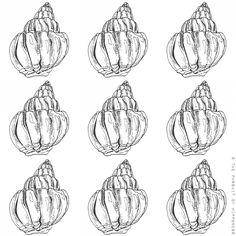 Seashells 1 Spiral- Pen Illustration