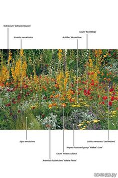 planting combination with mainly yellow, then red and purple flowers. Landscape Borders, Garden Borders, Landscape Design, Plant Design, Garden Design, Stipa, Planting Plan, Border Plants, Colorful Garden