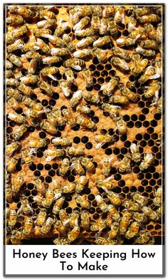 The survival of a colony of bees living in a bee hive depends on the queen bee. Without queen bee the hive will die. The hives queen is the only female bee that has fully developed reproductive organs.