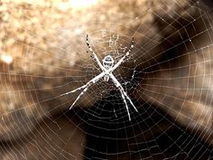 spider photography #photography #spider #animal #nature #beautiful - from @johnnychunga on Ello.