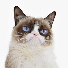 https://www.facebook.com/TheOfficialGrumpyCat/photos/a.562257323810009.1073741825.435475646488178/868110166558055/?type=1