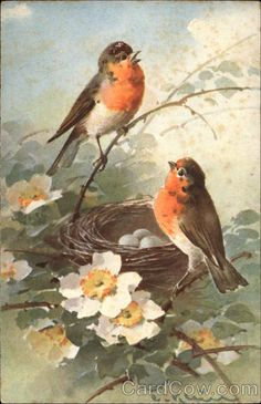 Postcard: Two Robins at their Nest by C. Klein
