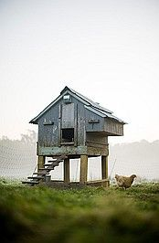 Cool chicken house.