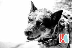 Husky, Dogs, Photography, Animals, Photograph, Animaux, Doggies, Photography Business, Photoshoot