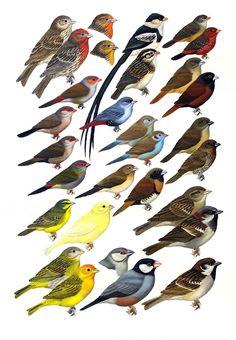 Diverse voliere vogels