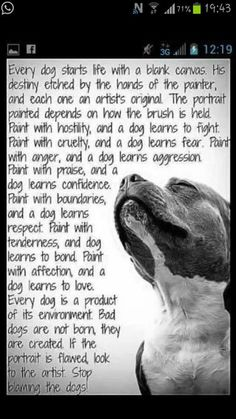 Pitbulls possess a reputation which is no fault of their own. Many readers finding this article will agree that a properly raised and maintained pitbull is an Rottweiler, I Love Dogs, Puppy Love, Animals And Pets, Cute Animals, Citations Film, Golden Retriever, Retriever Dog, Pit Bull Love