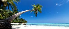 karibik strand palme