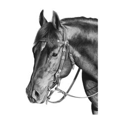 Snaffle Bit Cow Horse – Horse drawing by Karmel Timmons