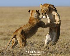 Serengeti National Park | Serengeti+National+Park+Tanzania+24.jpg