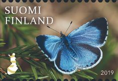 Finns voted for a stamp featuring Holly Blue, Finland's national butterfly, as the most beautiful stamp released in said. Nature Symbols, Holly Blue, Win Competitions, Nostalgic Images, Tove Jansson, Saunas, Girl And Dog, Route 66, Postage Stamps