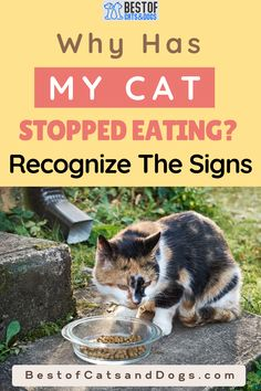Why Has My Cat Stopped Eating? A number of different conditions may be responsible, including infections, kidney failure, or intestinal problems. But it could be something as simple as...Read more here! #cat #cats #kittens #catfood #drycatfood #wetcatfood Cat Health Care, Cat Care Tips, Dry Cat Food, Kidney Failure, Healthy Pets, Cat Behavior, Kittens, Cats, Happy Animals