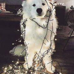 Tjugondag jul kommer snart... :)