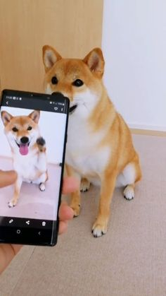 Count on me🐶💕 - Süss - Perros Graciosos Funny Animal Videos, Cute Funny Animals, Cute Baby Animals, Funny Cute, Funny Dogs, Animals And Pets, Cute Cats, Adorable Dogs, Cute Puppies
