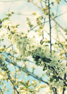 Spring CPH