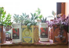 Tea tins for succulents.