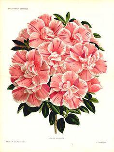 love antique botanical prints