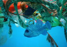 The Dirty Facts – Ocean Pollution Shocking news… We're drowning marine ecosystems in trash, noise, oil, and carbon emissions. I know… I know… Terrible… Those poor sea creatures. Ocean Pollution, Plastic Pollution, Techno, Great Pacific Garbage Patch, Marine Ecosystem, Marine Conservation, Sea Birds, Marine Life, Sea Creatures