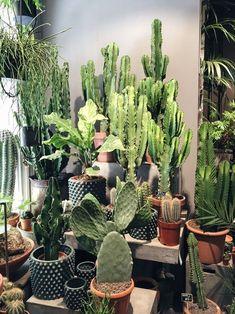 Cactus--more please--cannot get enough-- Succulent Seeds, Cacti And Succulents, Planting Succulents, Cactus Plants, Moss Plant, Plant Aesthetic, Container Plants, Green Plants, Live Plants