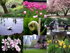 no place more beautiful than central park in the spring