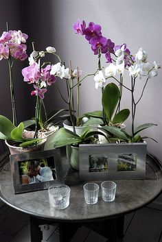 Gorgeous orchid table via moline: Lovin' this!