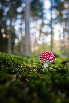 Spring, mushroom, smurfs