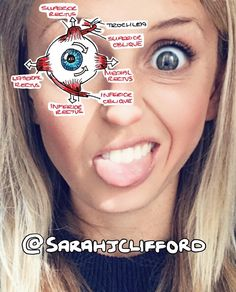 This is a shoutout to #snapchat with my proposition for a new filter which labels your facial anatomy - sooo Spring 2017 💁🏼 DM me Snapchat! 😜😂  #medlife #anatomy #getalife #medstudent #ophthalmology #eyes #neuro #medicine #medicina #futuredoctor #medica #anatomia #med #medicalschool #medicalstudent #studyingmedicine