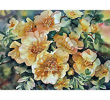 'Margaret's Roses' by Ann Mortimer Watercolor Flowers, Watercolour, Framed Prints, Canvas Prints, Art Prints, Canary Birds, 1 Rose, China Painting, Decorative Throw Pillows