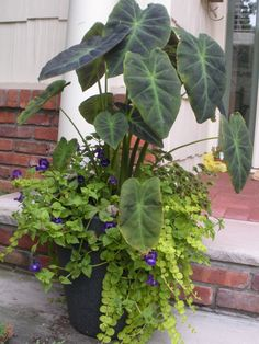 1000 images about potted plants on pinterest sweet
