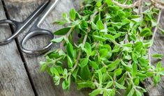 Spinach, Pregnancy, Herbs, Vegetables, Plants, Pregnancy Planning Resources, Herb, Vegetable Recipes, Plant