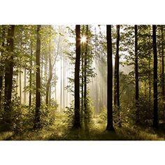 Vlies Fototapete 'Wald' 352x250 cm - 9010011a RUNA Tapete