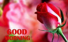 Good Morning With Flower