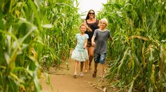 """York Maze features not only a giant """"maize maze"""" but numerous other mazes and attractions for a family day out in Yorkshire. Days Out In Yorkshire, North Yorkshire, Stuff To Do, Things To Do, Good Things, Family Days Out, Maze, Making Out, Illusions"""