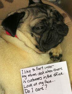 Mr. Pug is unashamed of his killer death farts