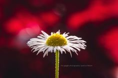 Just a Weed   Beauty of Macro