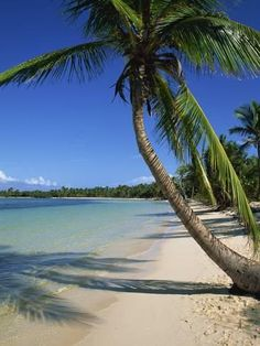 Photographic Print: Bavaro Beach, Dominican Republic Poster by Lightfoot Jeremy : 24x18in