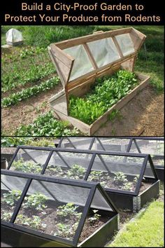 Protect Your Produce from Rodents by Building This City-Proof Raised Garden Bed . - Protect Your Produce from Rodents by Building This City-Proof Raised Garden Bed - Vertical Vegetable Gardens, Indoor Vegetable Gardening, Veg Garden, Vegetable Garden Design, Organic Gardening Tips, Garden Trellis, Garden Seat, Gardening Zones, Veggie Gardens