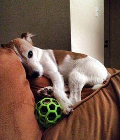If you think I'm sleeping than just try and take my ball..rm