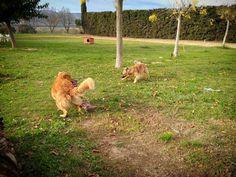 Grandes amigos #residenciacanina #guarderiacanina #alojamientocanino #canguroperros #perro #gos #dog