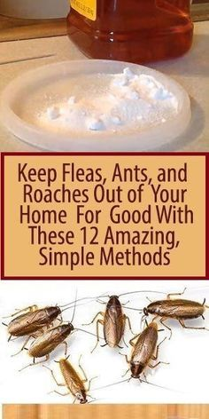 Fleas and ants! Thankfully haven't had to deal with roaches. Keep Fleas, Ants, and Roaches Out of Your Home For Good With These 12 Amazing, Simple Methods - InShapeToday Household Cleaning Tips, House Cleaning Tips, Diy Cleaning Products, Cleaning Hacks, Household Products, Deep Cleaning, Household Pests, Kitchen Cleaning, Household Cleaners