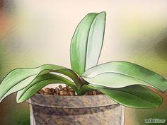 Come Favorire la Fioritura delle Orchidee: 11 Passaggi