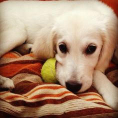 Stella <3 my little guest